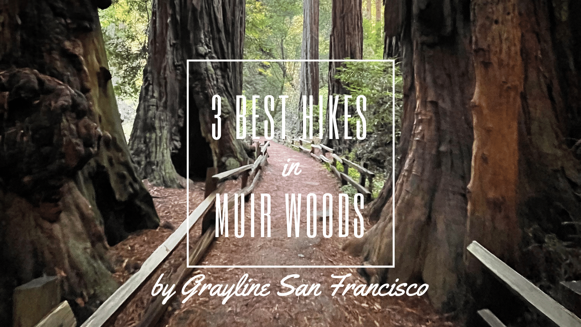 3_Best_Hikes_in_Muir_Woods_THUMBNAIL.png