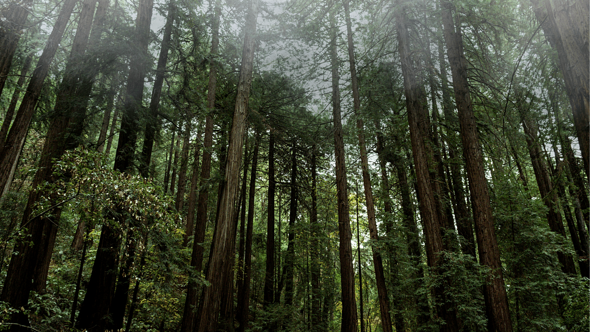 muir_woods_reduced.png