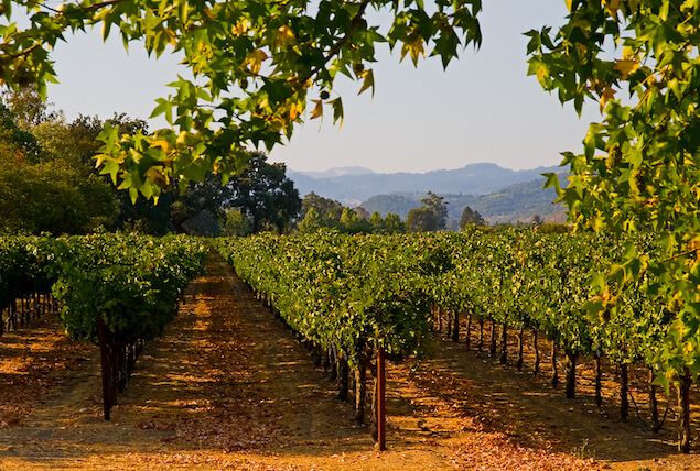 napa-valley-vinyard-wine-autumn.jpg