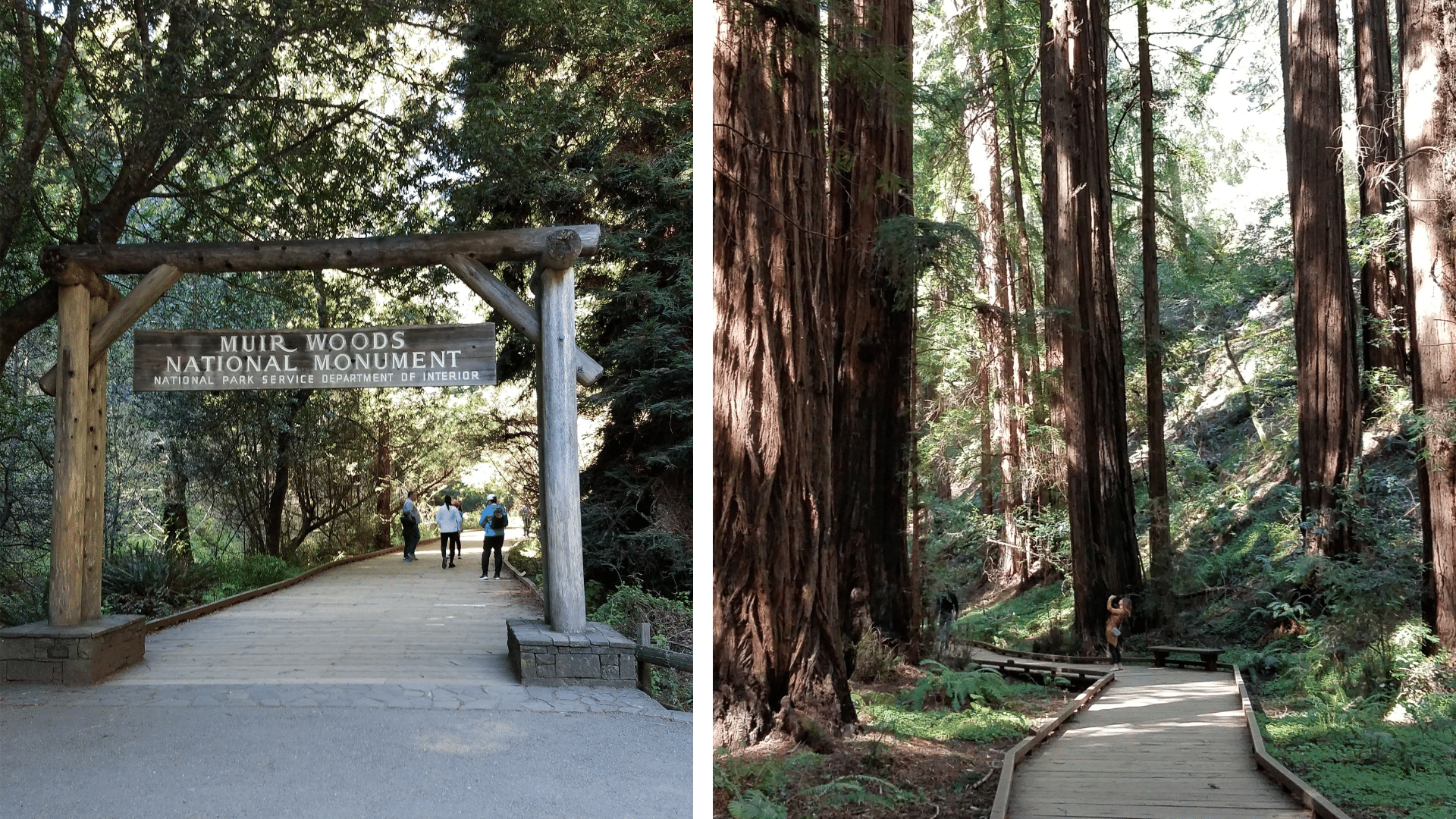 Muir_Woods_entrance__Wooden_Path.png