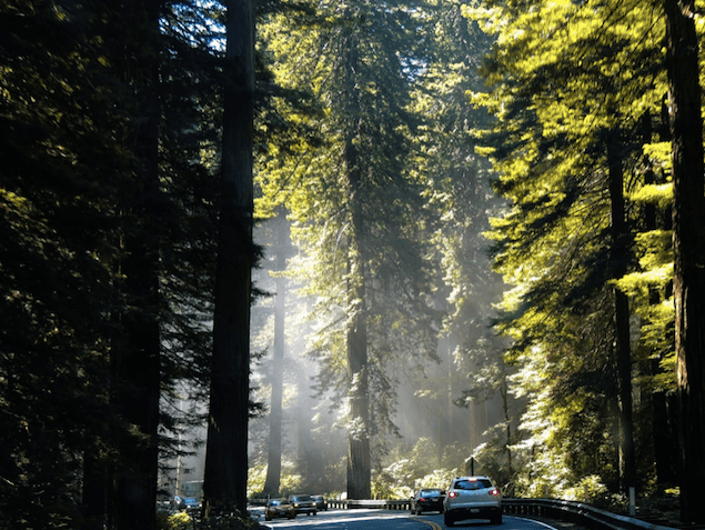 SF-muir-woods-tour.png