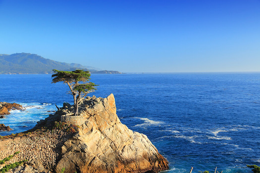 Lone-cypress-tree-monterey-bay-california-landscape-picture.jpg